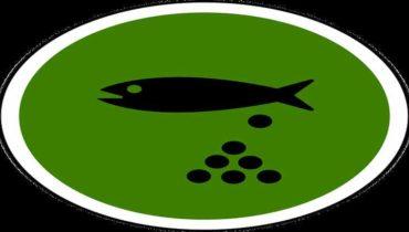 tření ryb