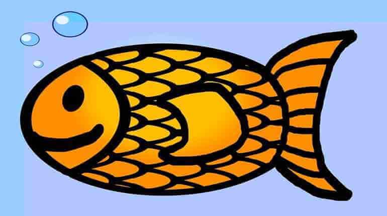 slengové názvy ryb