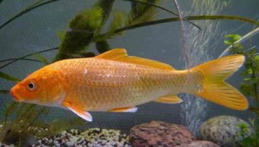 zabarvení ryb